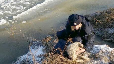 Bohaterscy policjanci uratowali tonącego psa