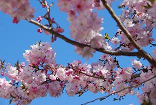 Powitaj wiosnę z Mazowszem